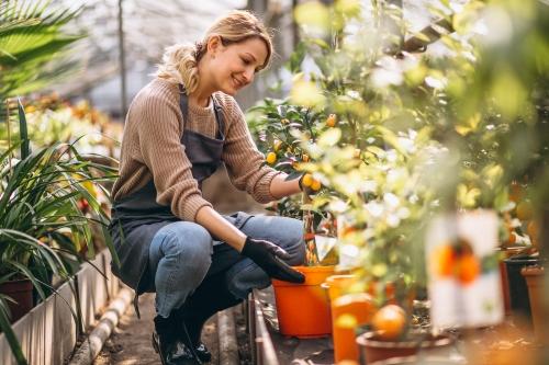 Les nostalgiques des jardins ouvriers peuvent se réjouir : le potager urbain a le vent en poupe.